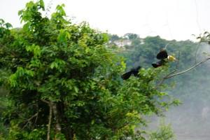 Bird Chasing Tucan in Iguazu
