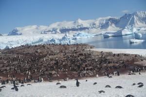 Penguin Community