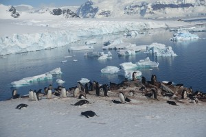 Penguins over ice