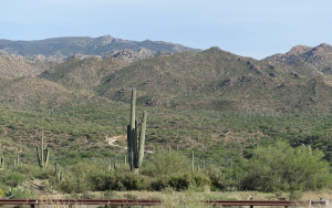 First Cactus into Phoenix-1