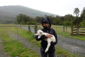 paula-holding-2-day-old-lamb