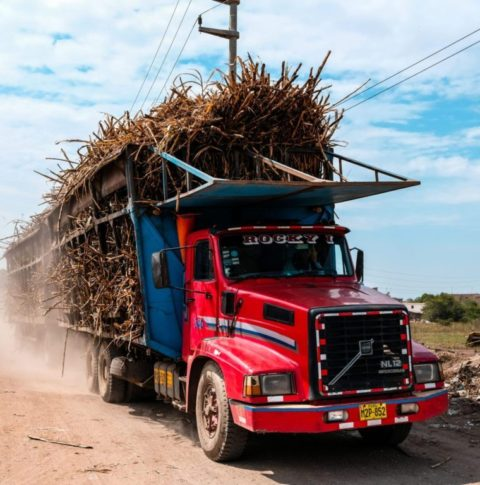 Truck with hay-2