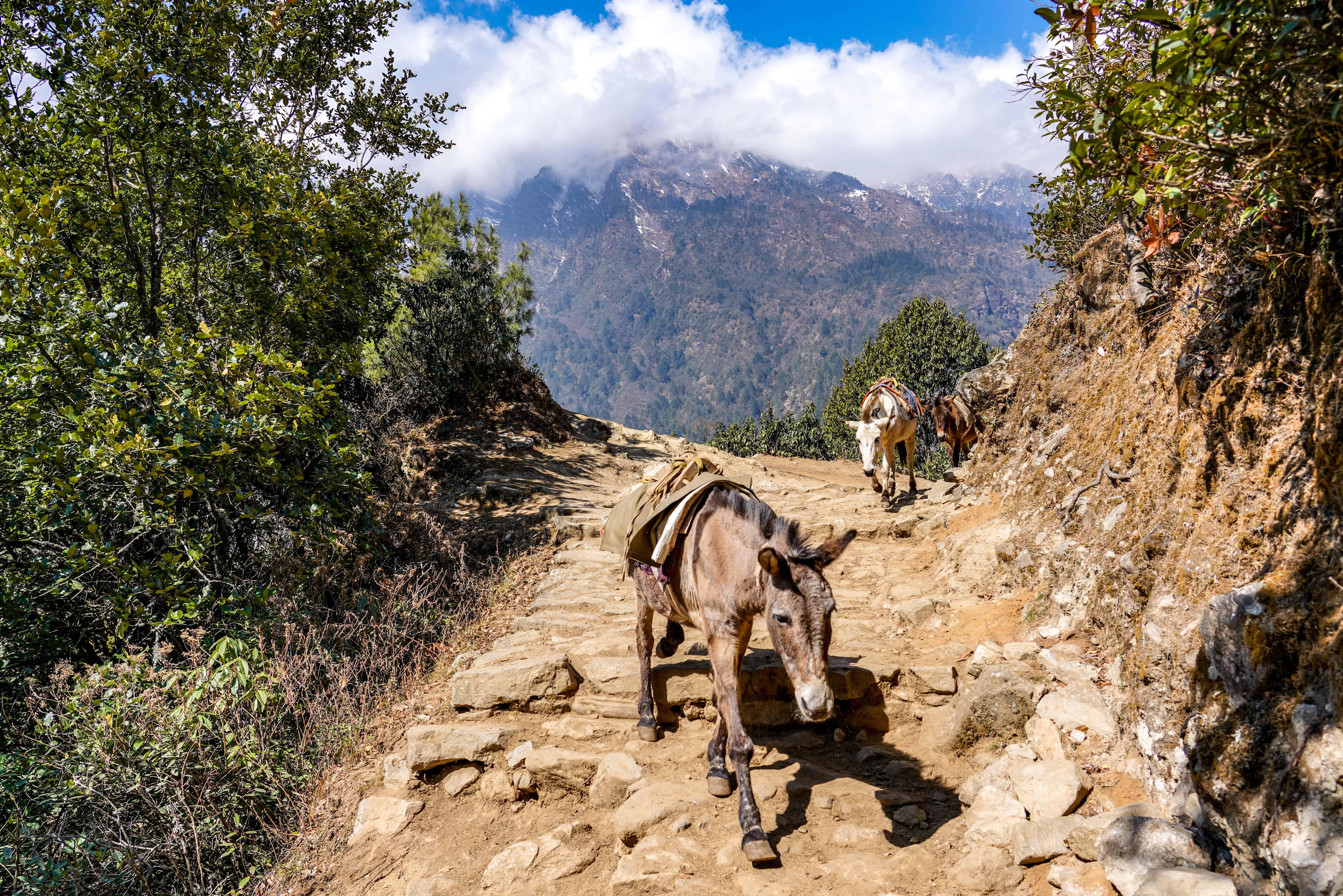 Skinny Donkey on trail-1