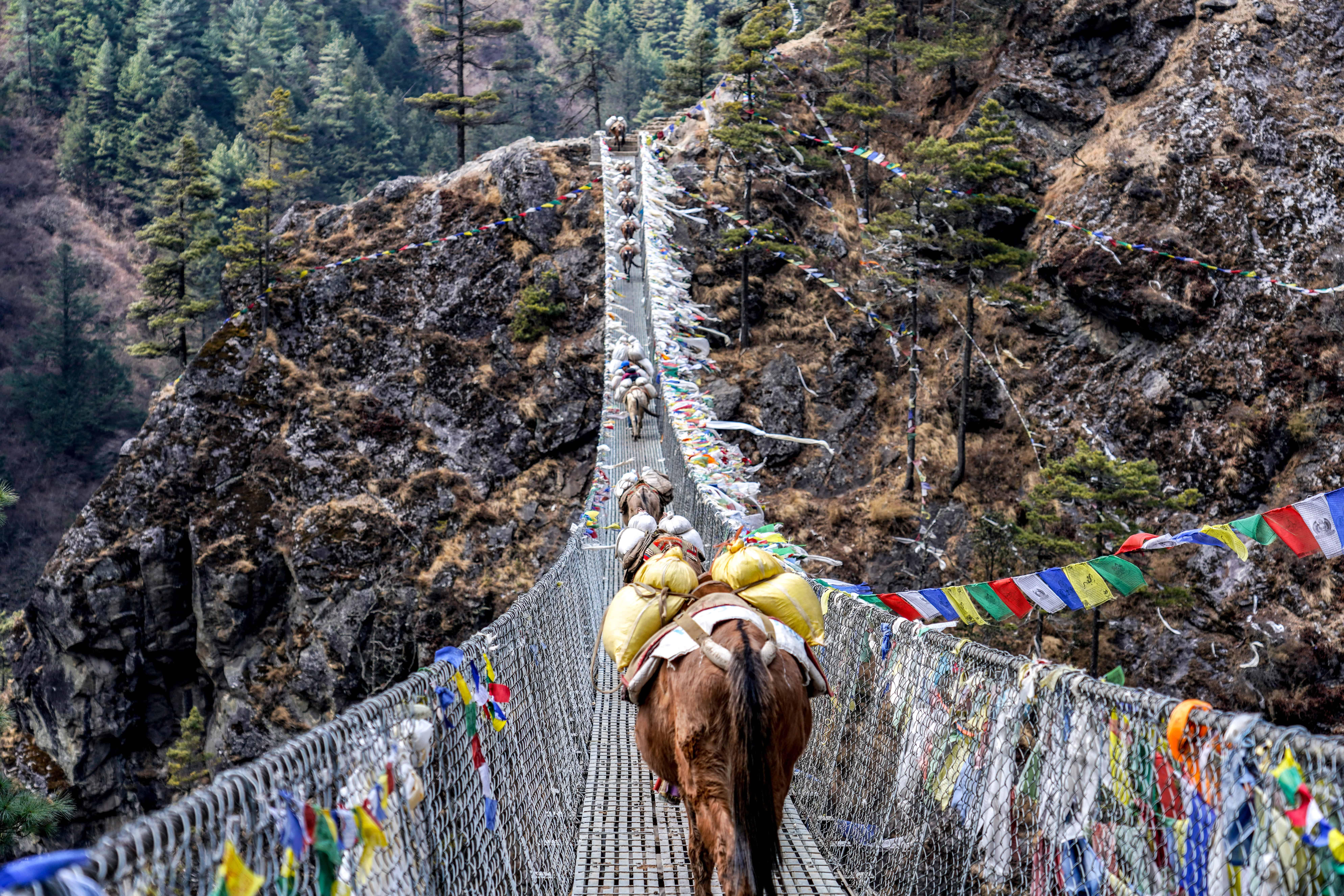 Train of Donkeys Rears walking over Bridge-1